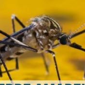 Tema de Vestibular UERJ: Febre Amarela na Biologia